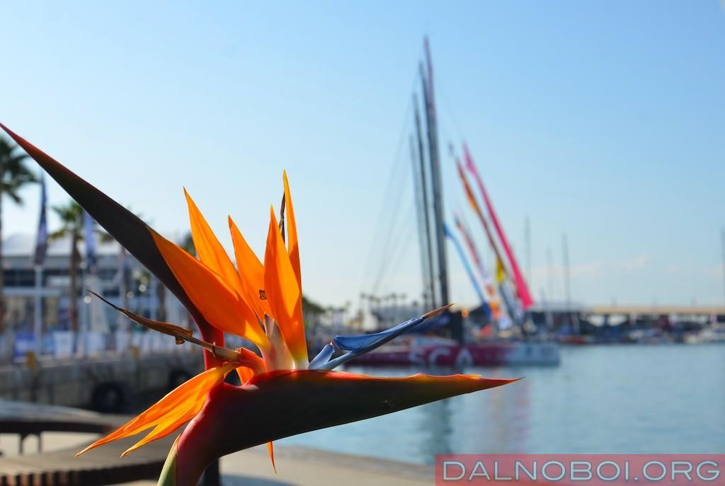 Volvo_Ocean_Race_2014_036