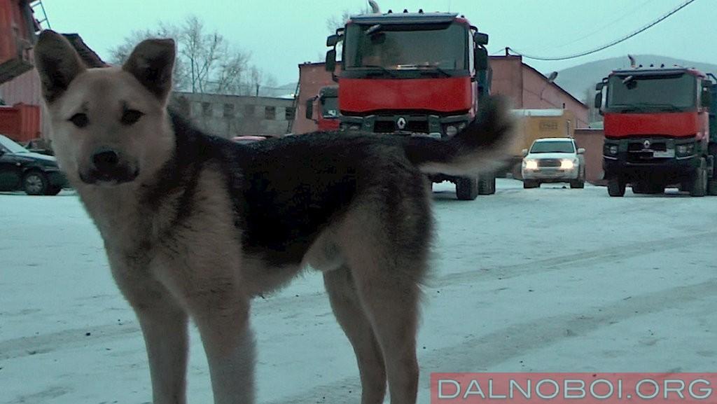 Renault_Trucks_K480_6х6_04